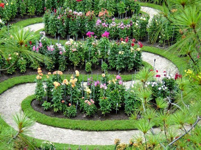 Labirinto delle dalie for Dalie giganti