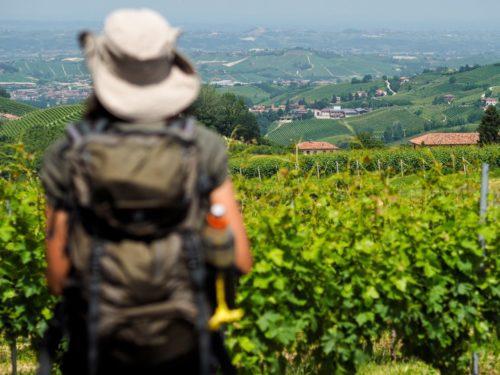 Passaggiata tra le vigne alla scoperta del Re dei Vini
