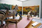 Museo di Storia Naturale Faraggiana Ferrandi – Novara
